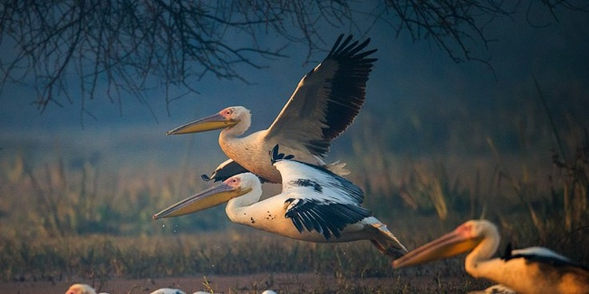 Tour and Travel Bharatpur
