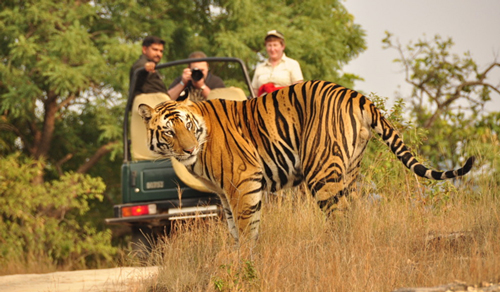 Tour and Travel Jaipur with Ranthambhore -04 Nights / 05 Days